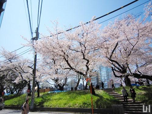 マンション前 - 神田川沿い
