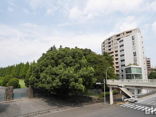 マンションは新宿御苑のすぐそばにあります