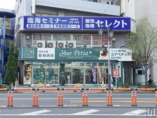 ユアペディア 雪谷大塚店